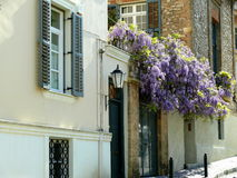 Street view of homes with purple wisteria flowers in Athens Greece stock photos