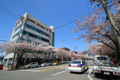 Street view in Jinhae, South Korea Stock Photography