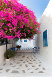Street at the village of Perdika on Aegina Island in Greece. With whitewashed houses and bougainvillea plant Stock Image