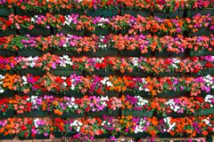 Street wall covered with flower pots, Floral pattern background stock image