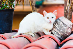 Street white cat with different eyes. Heterochromia stock photos