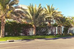 Street with white houses and palm trees in the southern country stock photos
