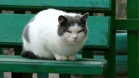 Street white sulphur cat sitting on bench in stock video
