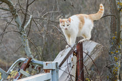 Street wildcat. A stray wild cat watching and looking for prey next Stock Photography