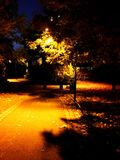 Streetlamp in autumn. Evening with tree Royalty Free Stock Images