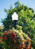 Streetlamp w ogródzie Zdjęcia Royalty Free
