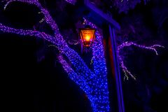 Free Streetlight And Illuminated Trees On Christmas Garden At Busch Gardens 2 Royalty Free Stock Image - 150722506