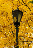 Streetlight in the autumn park Stock Photos