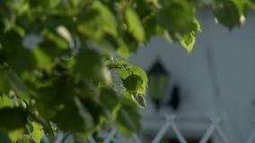 Streetlight na domowym odmienianie ostrości wideo zbiory