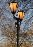 Streetlight på bakgrunden av kala filialer Royaltyfria Bilder
