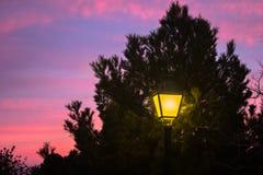 Streetlight som skiner under ett träd fotografering för bildbyråer