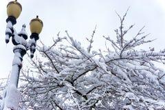 Streetlight, Tree, and Snow Stock Image
