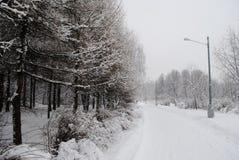 Streetlighten på en snöig väg i vintern parkerar Arkivfoto
