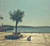 Streetphotography在伊斯坦布尔,土耳其 库存图片