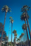 Palms of Beverly Hills. Streets of Beverly Hills with palms, California, cinematic retro vintage toned Royalty Free Stock Images