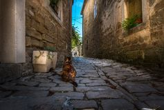 The streets of the city of Porec. Croatia. Walking along the old streets of Poreč. The beauty of the streets in the early morning and the silhouette of a cat royalty free stock images