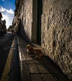 The streets of Gozo. Victoria. Malta. Red cat on the streets of a small town on the island of Gozo. Malta royalty free stock photos