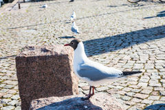On the streets of Helsinki Stock Photography