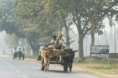 Streets of India. Cattle with people on the back on the streets of India stock photos