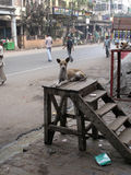 Streets of Kolkata. Stray dogs is sitting in the street Royalty Free Stock Image