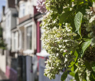 Streets of London, bunches of flowers. This image shows one of the streets of London with a focus on some bunches of flowers Stock Images