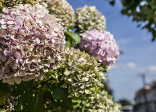 Streets of London - flowers. Royalty Free Stock Photography