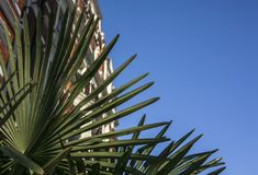 Streets of London, palm leaves and blue skies. This image shows a street in London, with the focus on some palm trees. It was taken on a sunny day in February royalty free stock images