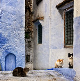 Streets from Morocco whit cats Royalty Free Stock Images