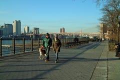 Streets of New York, Brooklyn Promenade USA Royalty Free Stock Photo