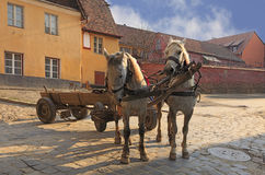 Streets of Sighisoara-Transylvania,Romania. Traditional horses and wagon at the entrance in the historical fortress of Sighisoara,Transylvania,Romania.These are Royalty Free Stock Images