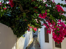 Streets of Stromboli. View of a narrow street in the volcanic island of Stromboli, with white houses, flowers and plants. Aeolian Islands, Italy Stock Photography