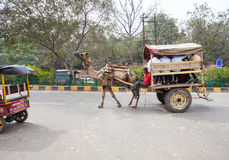 Streets of Taj Ganj Area in India Royalty Free Stock Photo