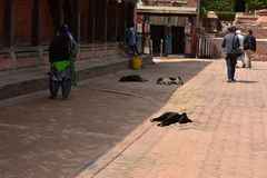 Nepal, Bhaktapur, dogs on the street. On the streets and in the temples of the cities of Nepal you can meet different species of animals that people feed to make Royalty Free Stock Image