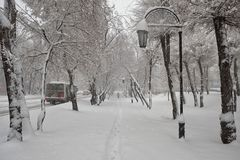 The streets and trees are covered with fresh snow. City landscape. Morning. The streets and trees are covered with fresh snow. Abakan. The Republic of Khakassia Stock Photography