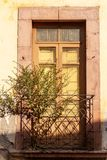 Streets of Zacatecas Mexico. Tree growing from old abandoned balcony in Zacatecas Mexico stock photography