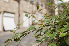 Streetsin Edimbourg - feuilles et maisons vertes images libres de droits