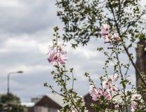 Streetsin Edimbourg - fleurs et arbres images stock