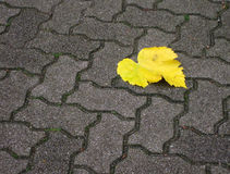Streetway of stoneblock and yellow leaf Stock Photos