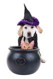 Strega di Halloween con il gatto immagine stock libera da diritti