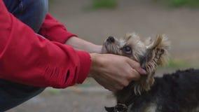 Streicheln eines Hundes auf einer Leine stock video
