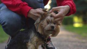 Streicheln eines Hundes auf einer Leine stock footage
