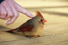 Streicheln eines Vogels Stockfotos