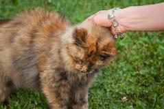 Streicheln Sie die Katze 1600 lizenzfreies stockfoto