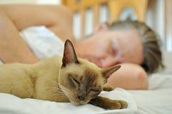 Streicheln Sie die Katze, die auf Bett mit reifer älterer Frau schläft stockfotografie