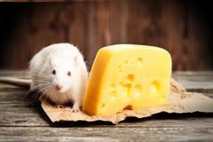 Streicheln Sie Ratte mit einem großen Stück Käse Lizenzfreie Stockbilder