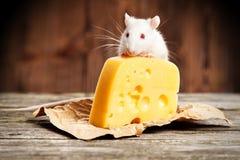 Streicheln Sie Ratte mit einem großen Stück Käse Stockfotografie