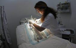Streicheln Sie an Tierarzt 020 Stockfotos