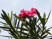 Streichelnde Blumen Stockfoto