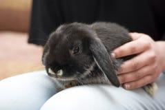 Streichelndes Kaninchen der Frau Lizenzfreie Stockbilder