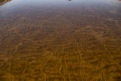 Streifen auf der sandigen Unterseite des Flusses von beweglichen Miesmuscheln lizenzfreies stockbild